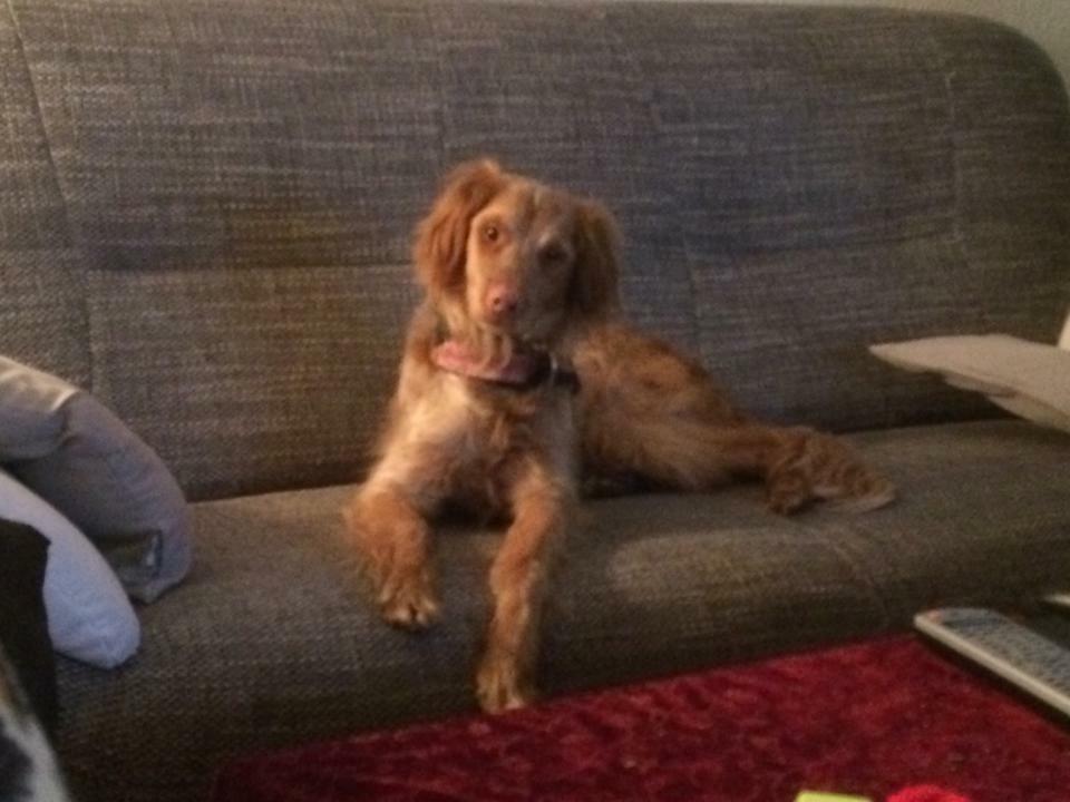 Ihr Hund und treuester Begleiter Kiwi den Katharina aus Spanien vor dem Tod gerettet hatte