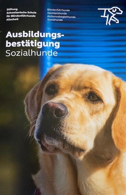 Sozialhundeausbildung