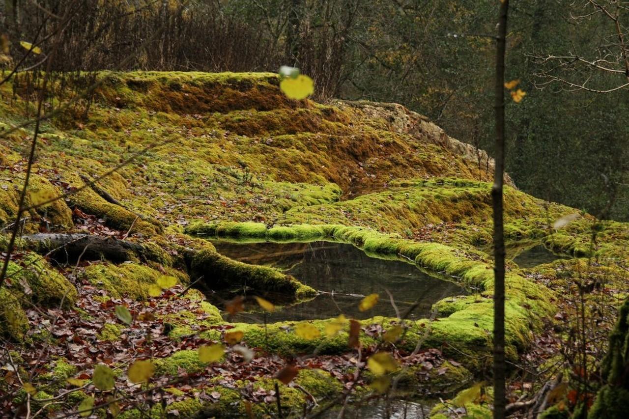 Truffières de Rolaimpont avec l'AEAEGUD - 2012 - S.Bunel