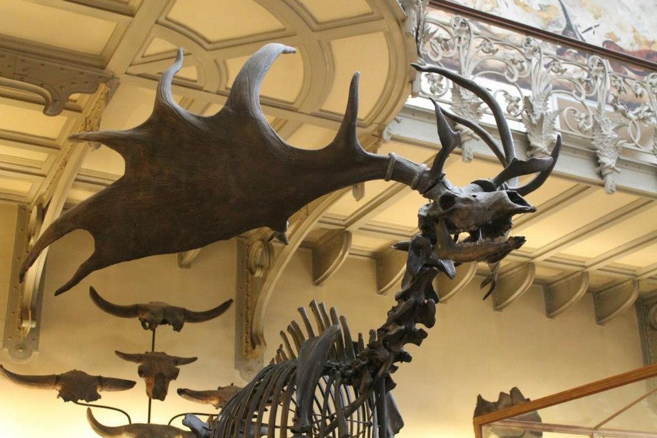 Museum d'Histoire Naturelle de Paris - 2012 - S.Bunel