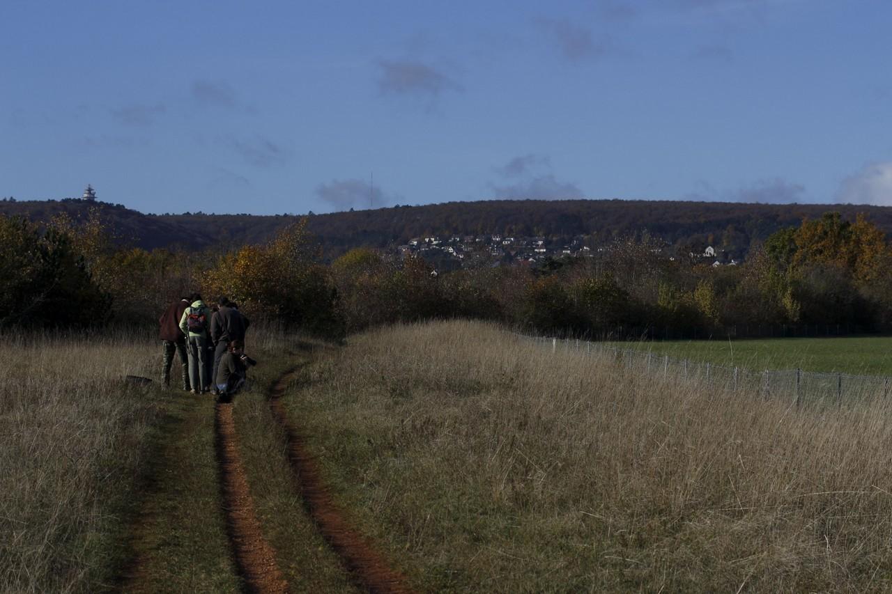Plateau de Chenôve - 2013 - F.Bernier