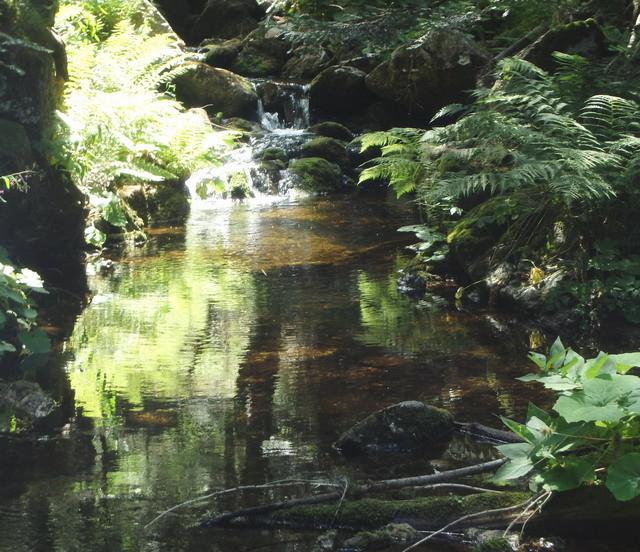 Ruisseau splendide