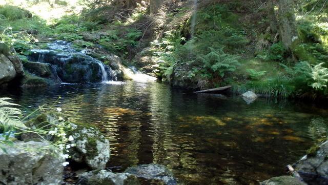 Ruisseau sauvage