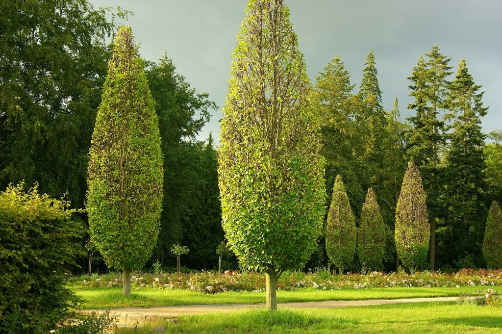 Lebensbäume im Volkspark