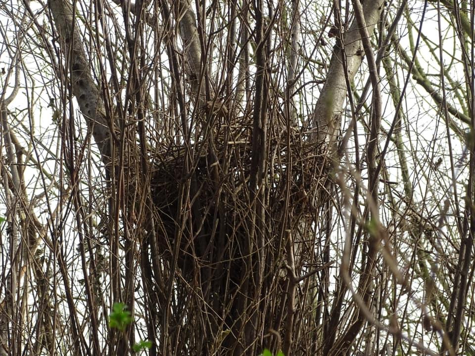 Snoeiwerkzaamheden in Park Noordhoekse Wiel houden rekening met broedende vogels