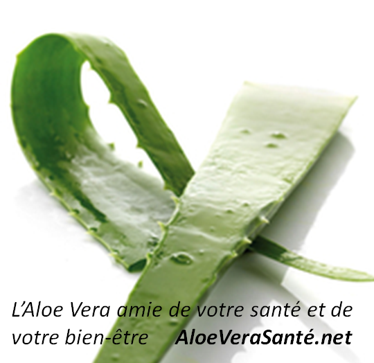 aloe vera entretien comment entretenir son alo s aloe magazine alo vera plante conseils de. Black Bedroom Furniture Sets. Home Design Ideas