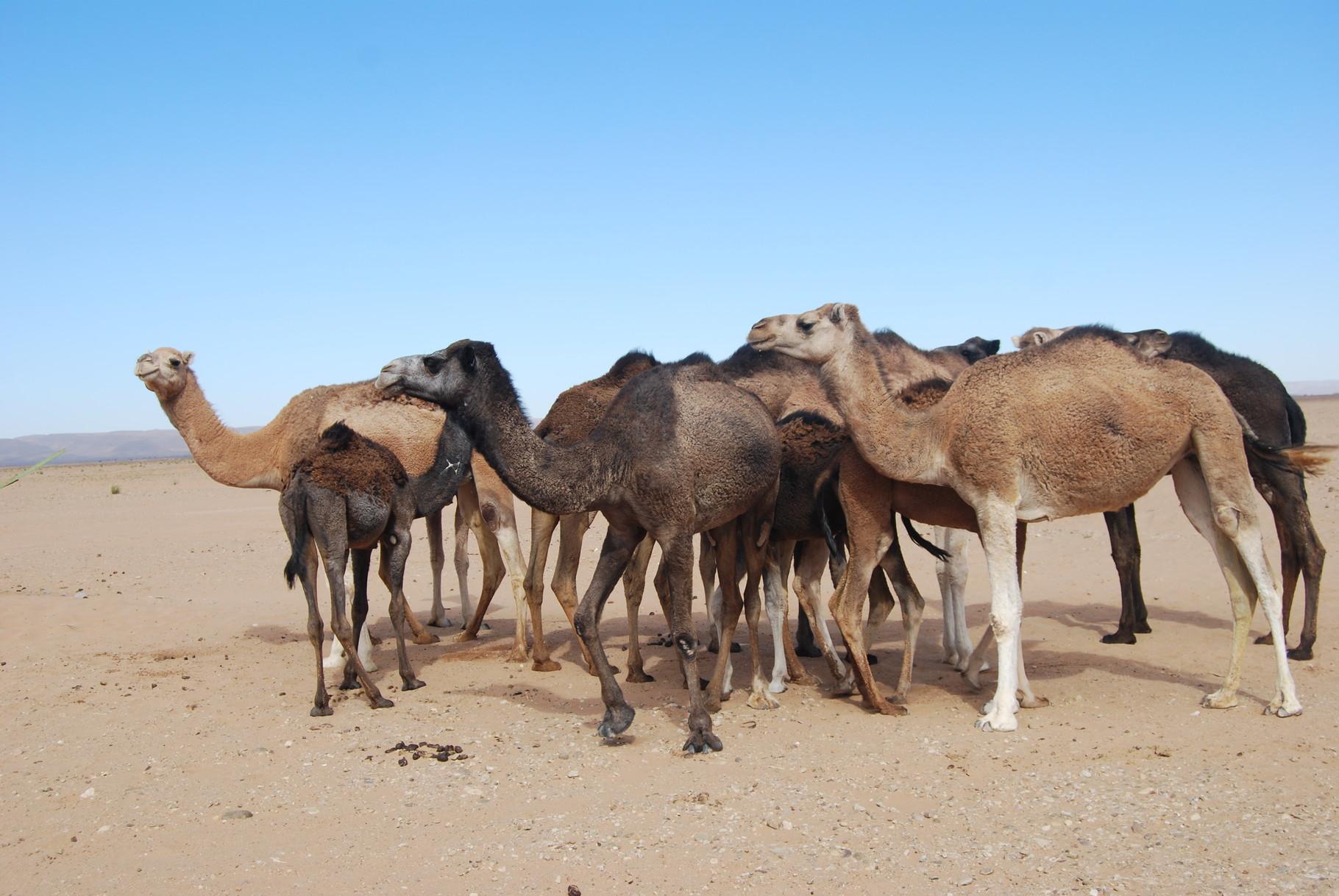 les habitants du désert