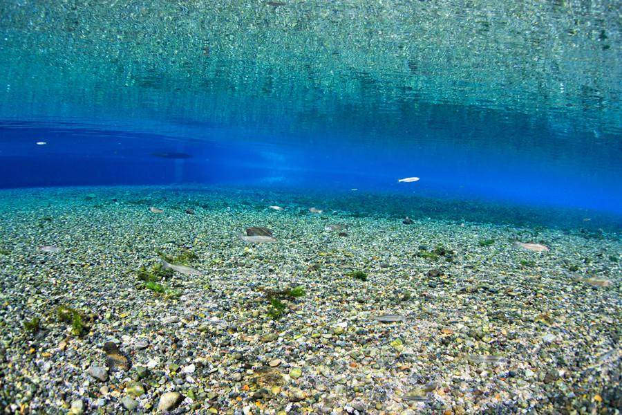 熊本湧水淡水ダイビング19 風景