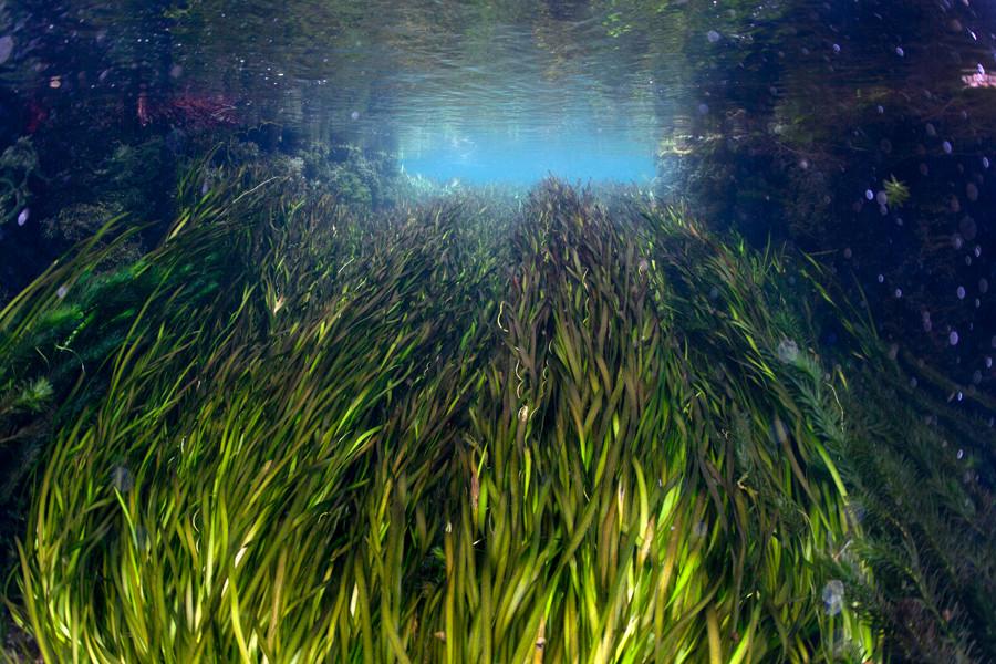 熊本湧水淡水ダイビング25 水草