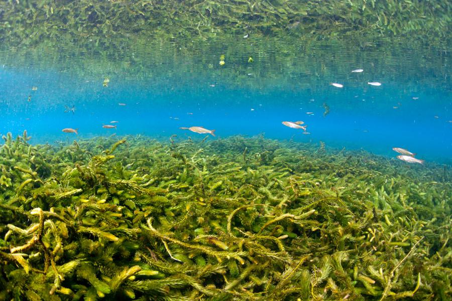 熊本湧水淡水ダイビング9 水草風景