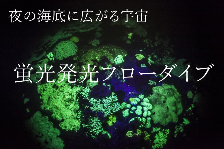 神秘の世界 天草蛍光発光フローナイトダイビング