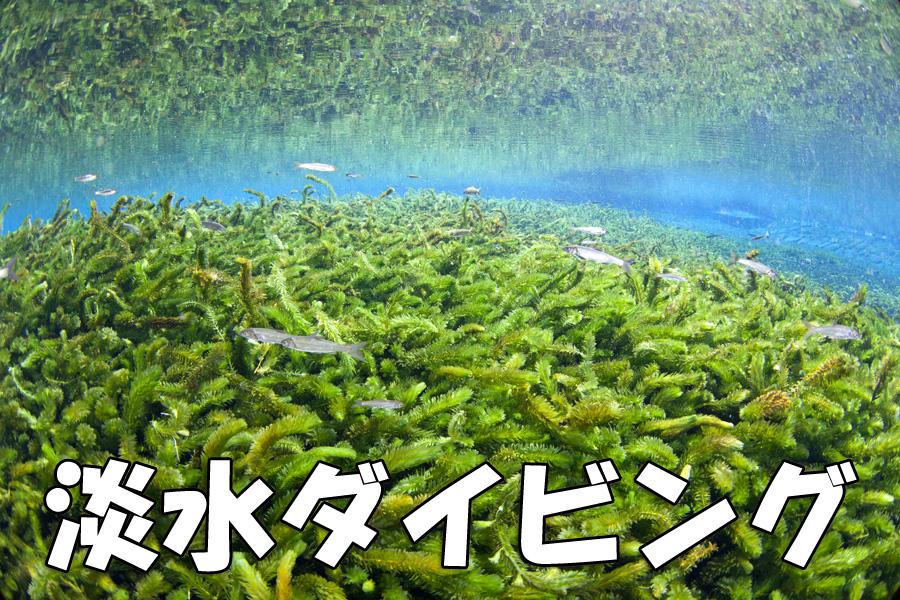 透明度30m超 熊本湧水淡水ダイビング