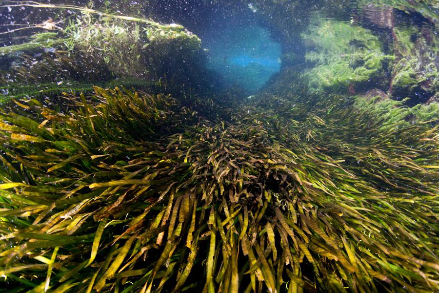 熊本湧水淡水ダイビング12 水草風景