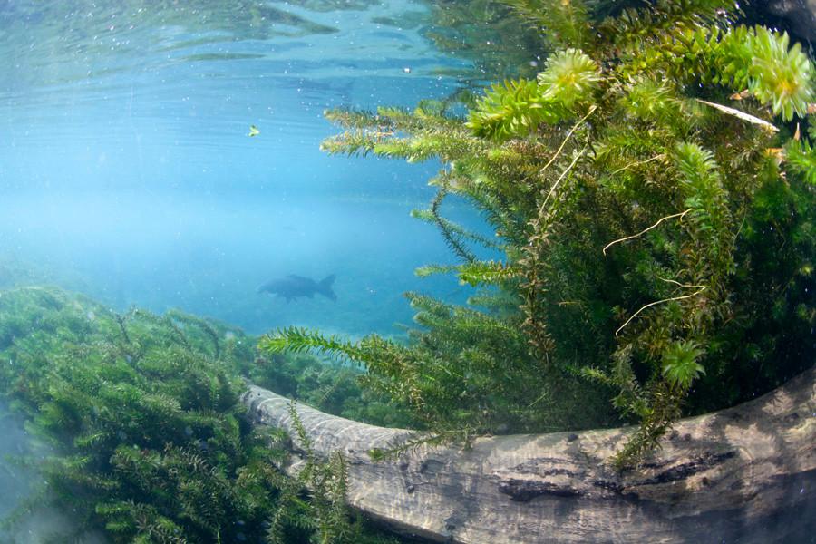 熊本湧水淡水ダイビング10 風景