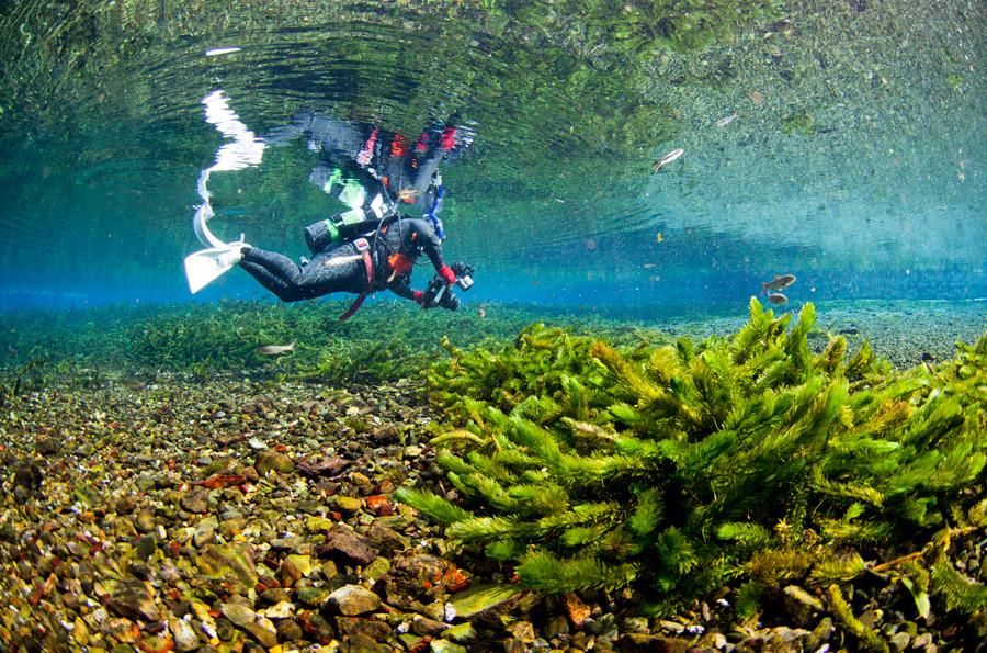 熊本湧水淡水ダイビング 風景