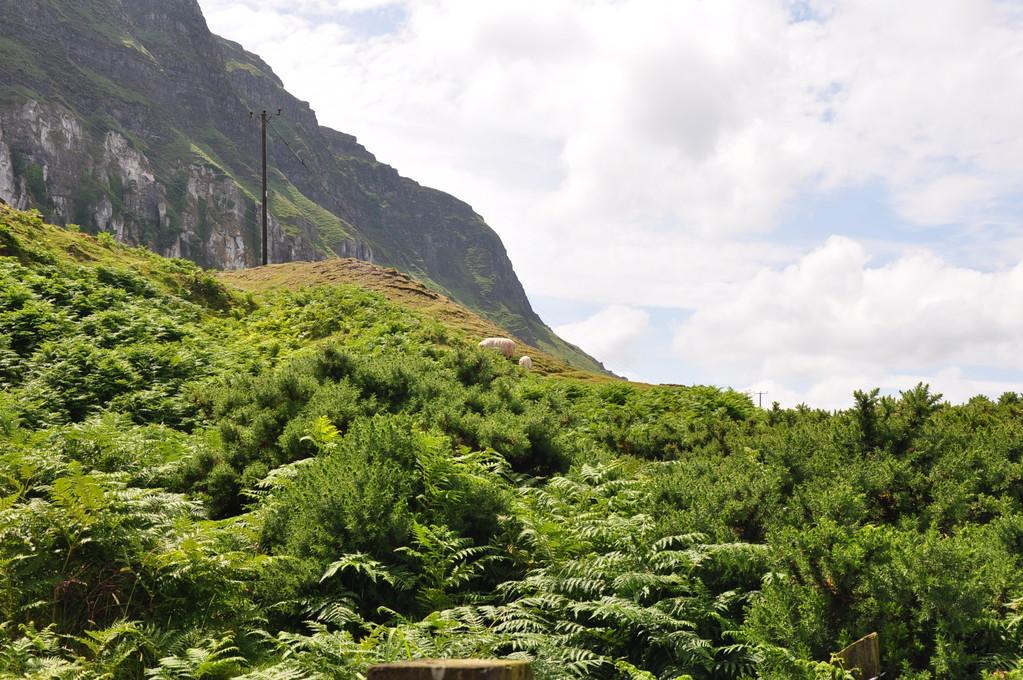 die schöne Küste von Antrim/the beautiful Antrim coast