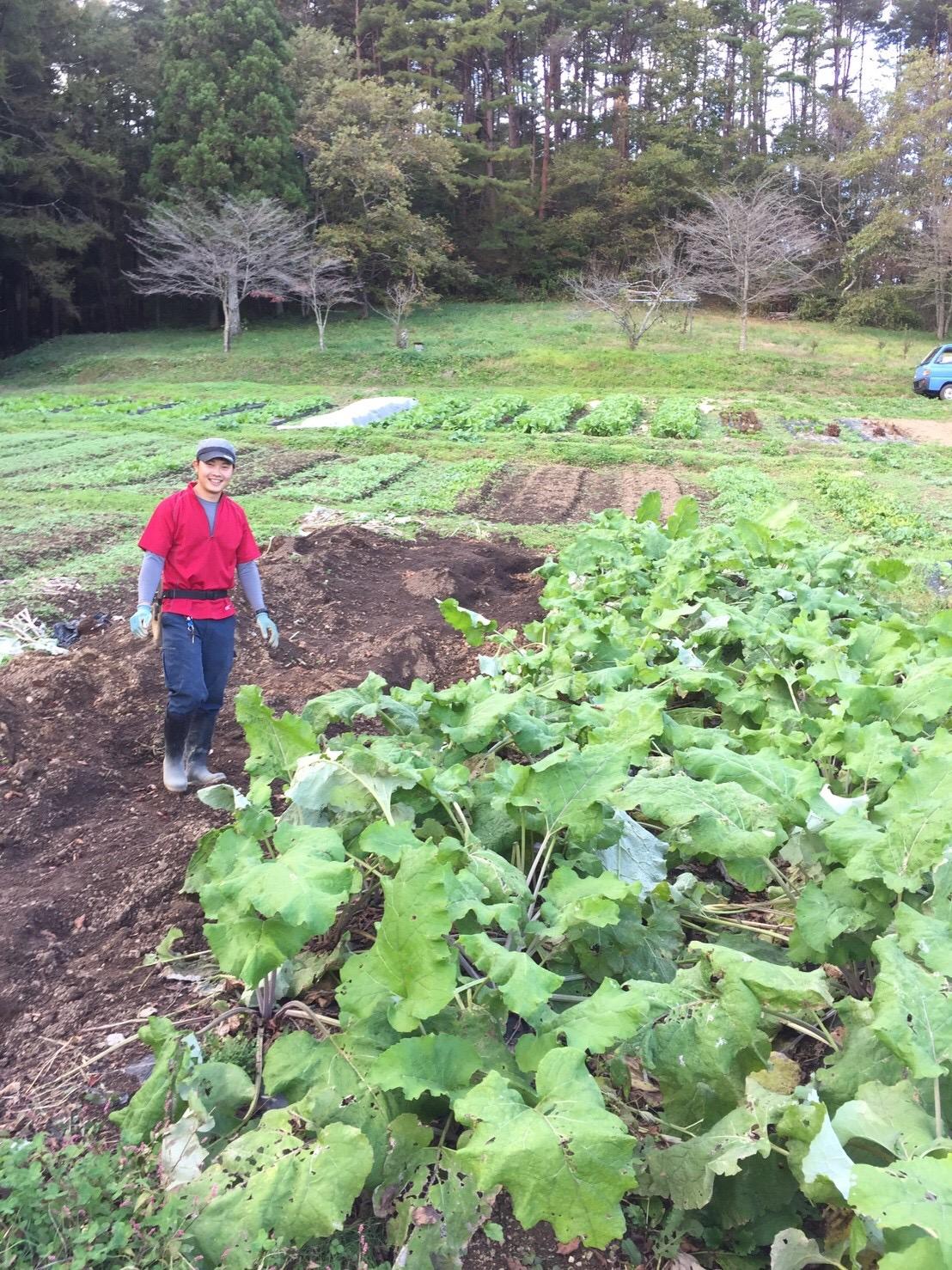 大学卒業後、農家を始めた鎌田大地さん。80種類以上の野菜を、無農薬で育てています。