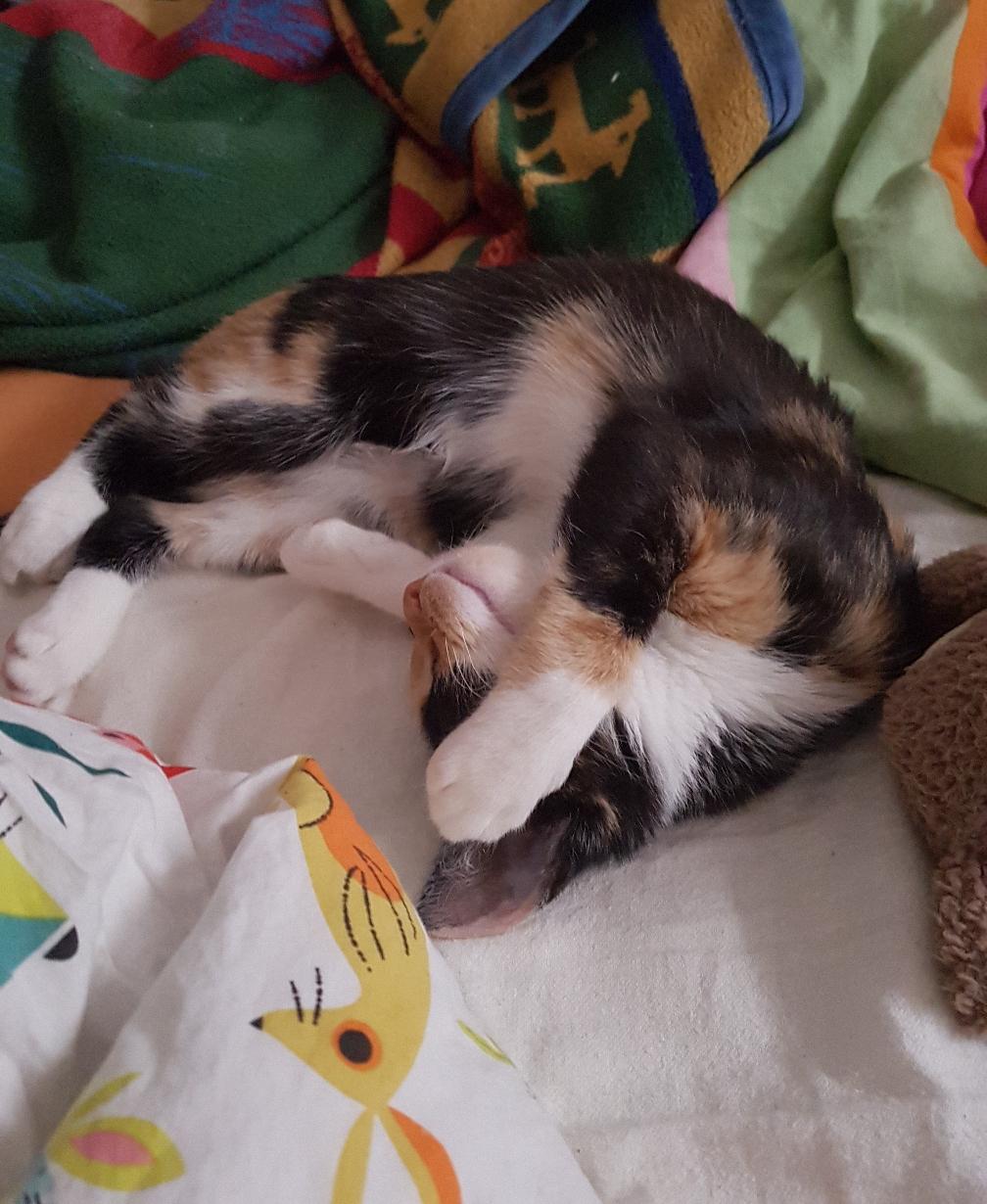 Katze Scarlett scheint sich schon selber mit Reiki behandeln zu können 😊