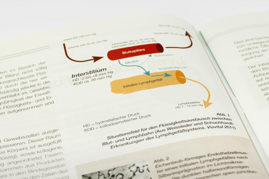 LymphoLife Magazin Illustrationen im Auftrag vom 8hdirekt