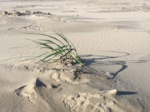 Wie eine Pflanze im Wind