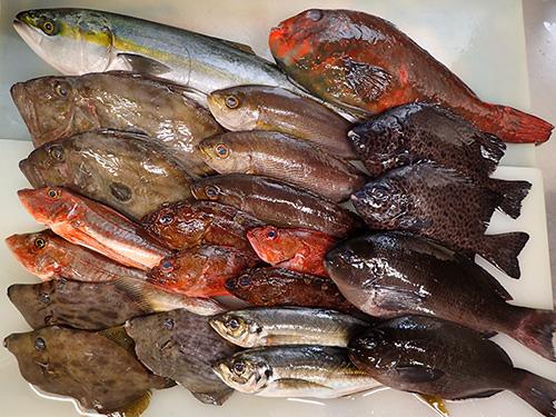未利用魚 天然地魚 宅配寿司 出前
