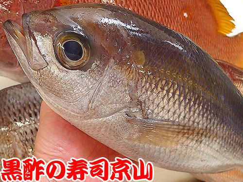 青鯛 アオダイ 寿司
