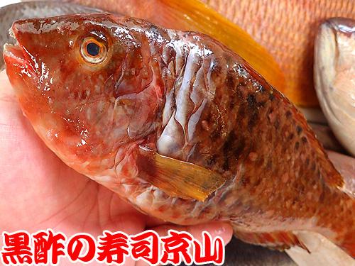 ブダイ 武鯛 寿司