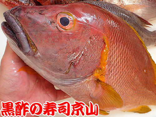 フエダイ 寿司