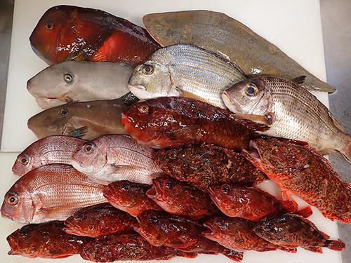五島列島 天然地魚