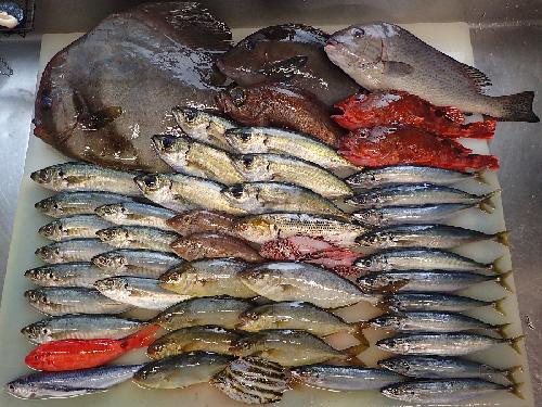 静岡県伊東市の天然地魚到着!