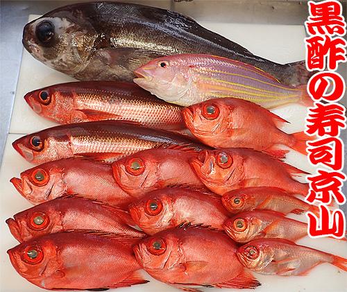 和歌山県串本の魚