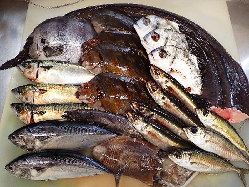 未利用魚 寿司