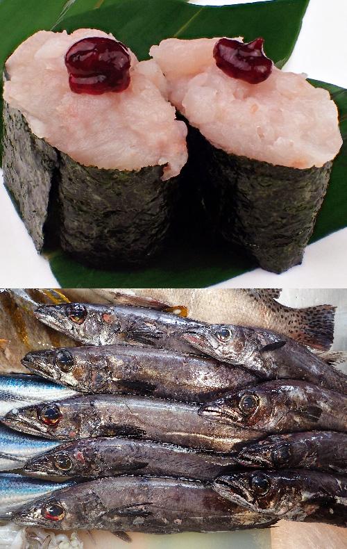 クロシビカマス 軍艦 寿司