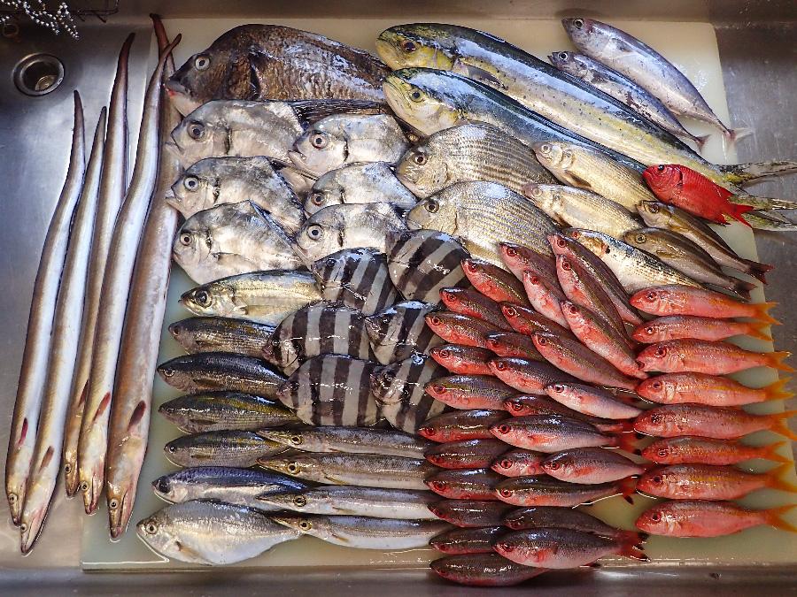 静岡県伊東市からの天然地魚到着!