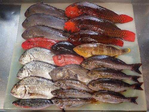 長崎県五島列島からの天然地魚到着!