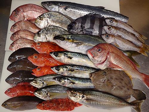 寿司 出前 未利用魚