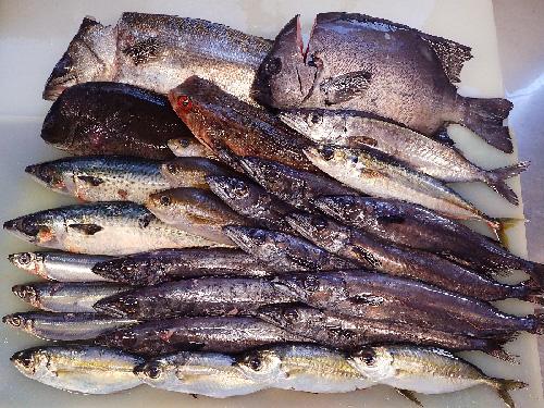 寿司 出前 千代田区 新鮮地魚