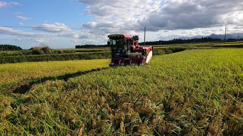 稲刈が始まりました!