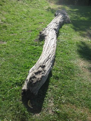 Natürliche Balancierbäume