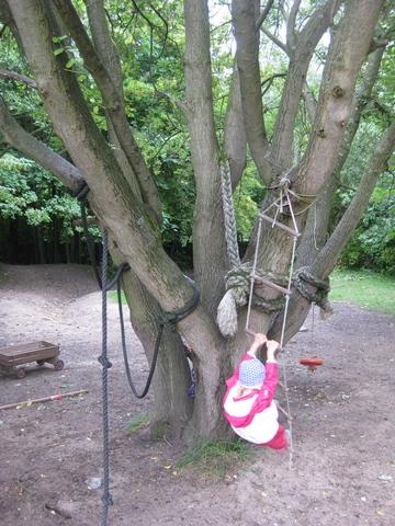 Seile und Strickleitern an Bäumen