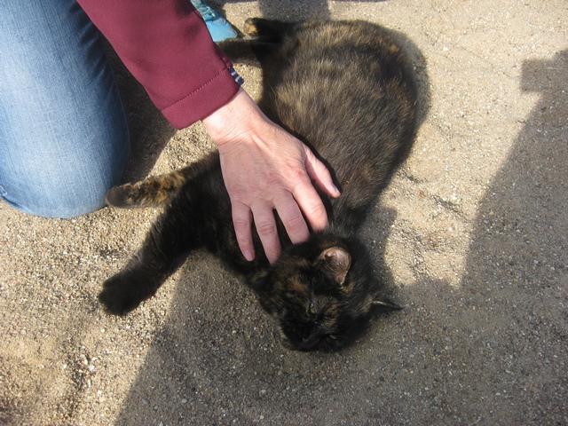 Katzen als Prüferbegleitung