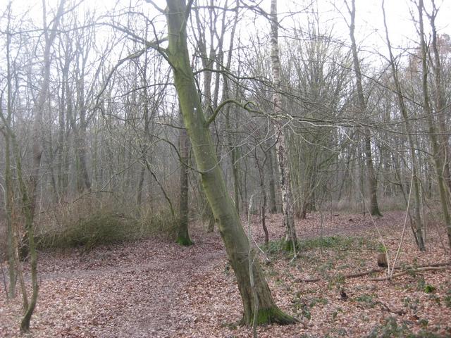Klettern im Wald