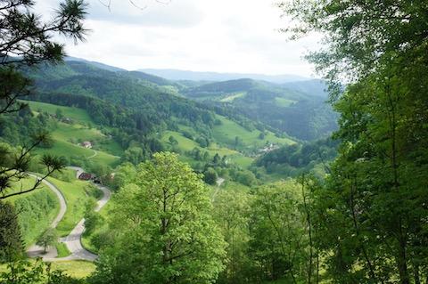 Schwarzwald bei Horben