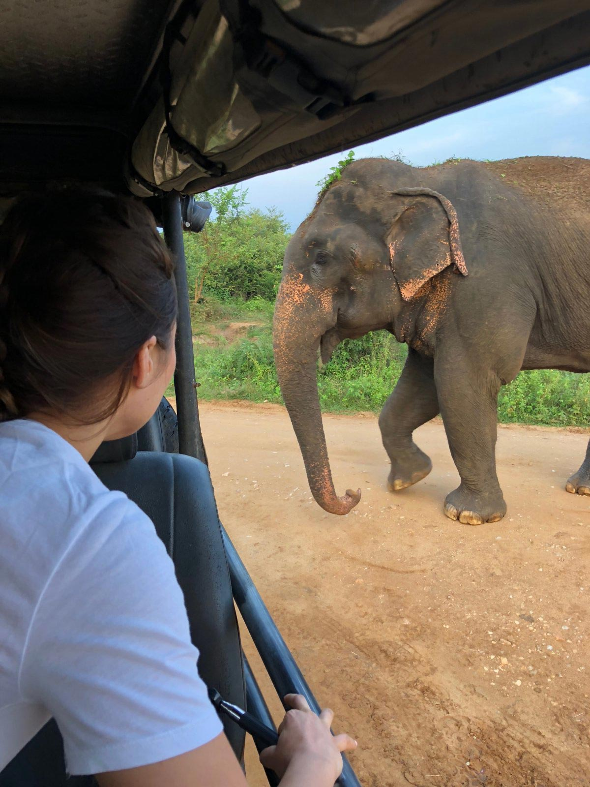 Elefanten auf Safari in Sri Lanka im Udawalawe Nationalpark