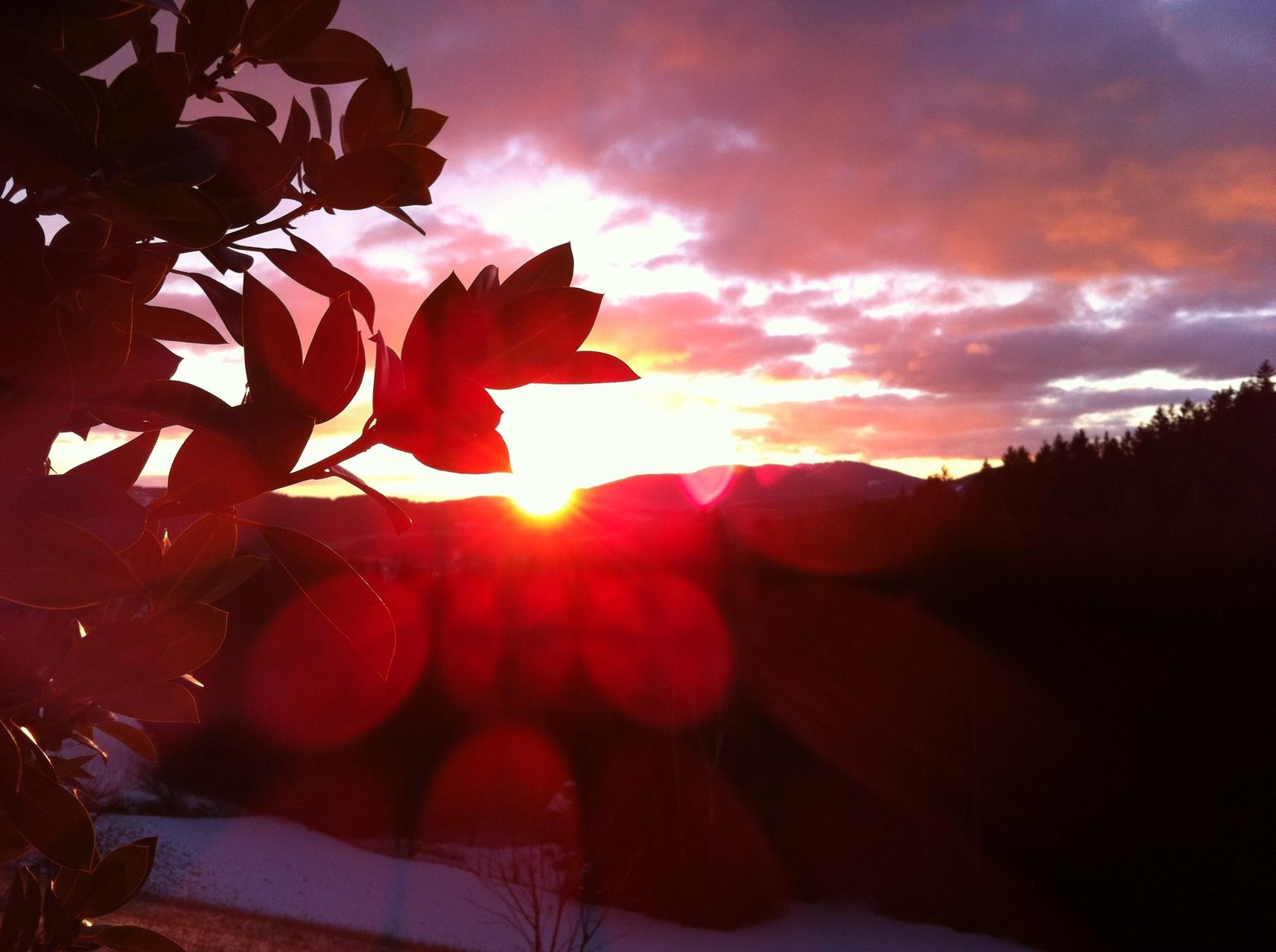 Sonnenaufgang vor der Brennerei