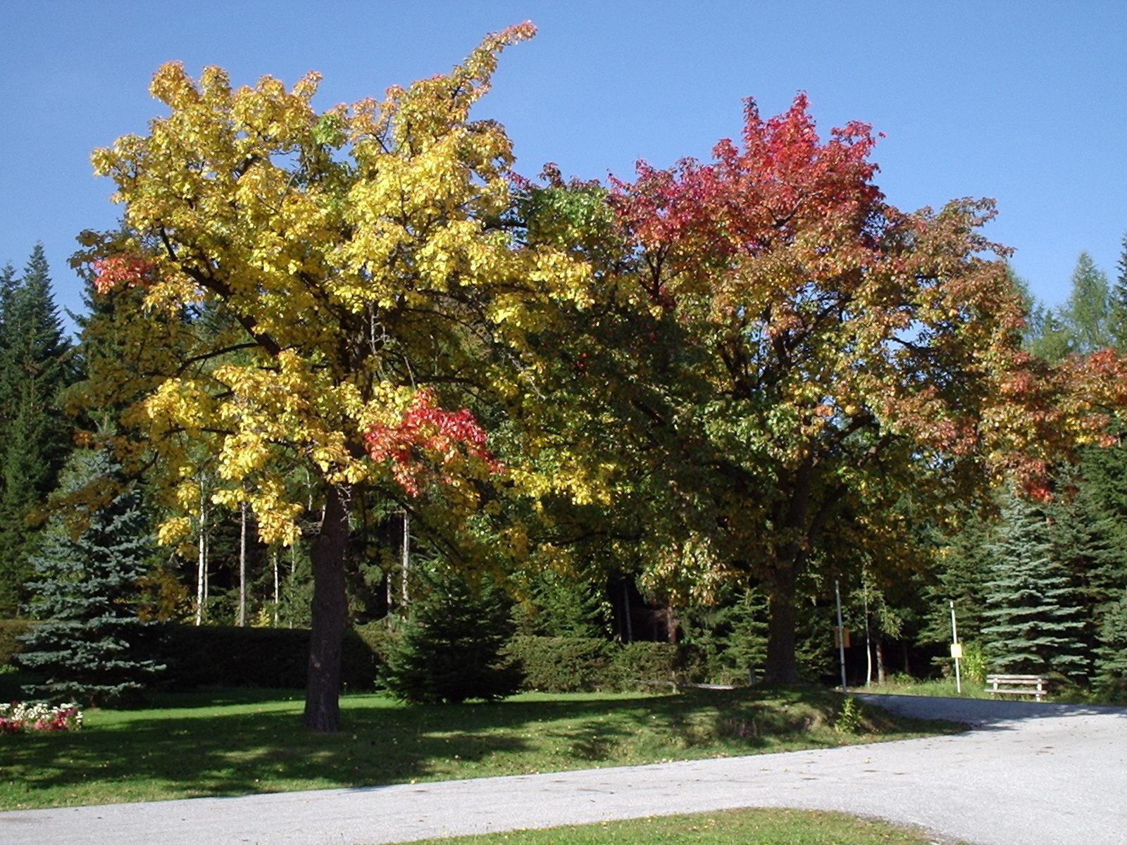 Unsere Obstbäume