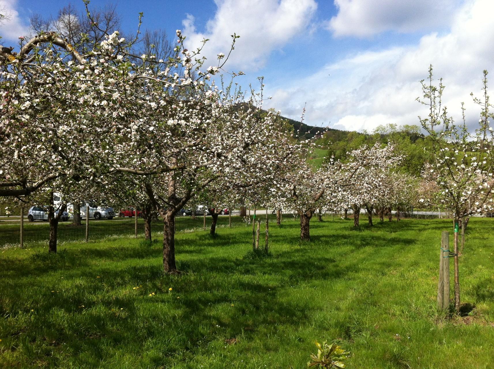 Unser Obstgarten in Stubenberg