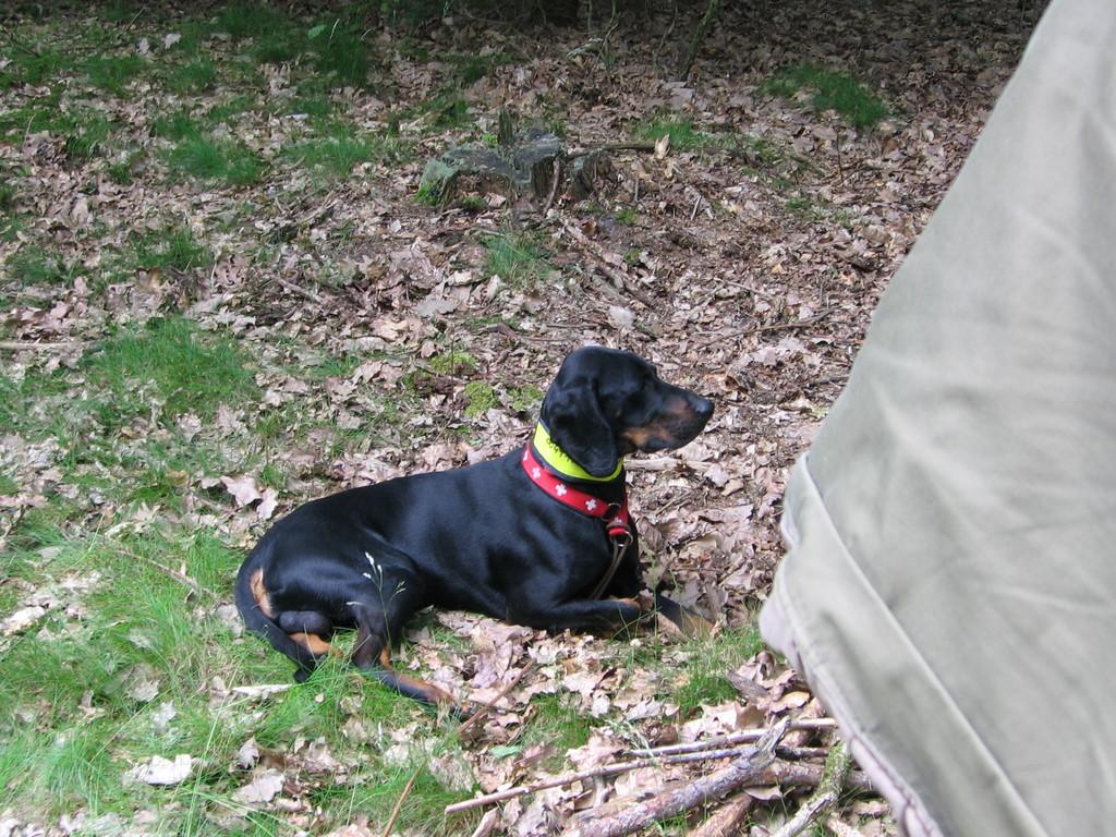 Warten im Wald