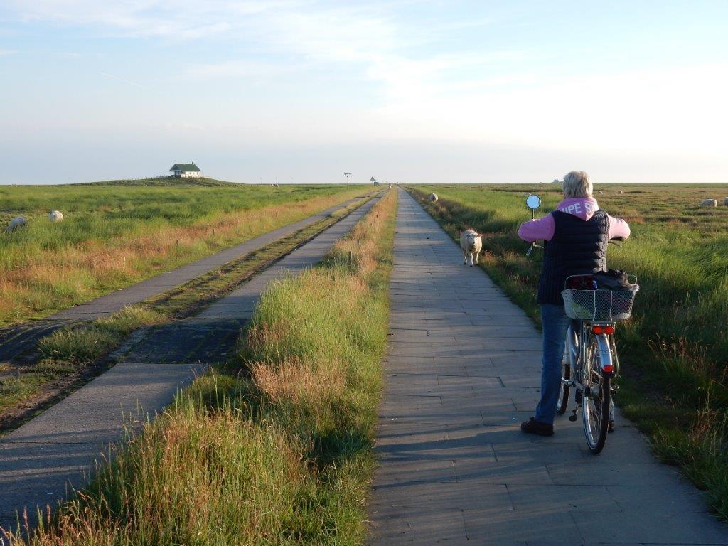 mit dem Fahrrad durch die Salzwiese, Fahrradverleihkosten für die Überfahrt 2.- €