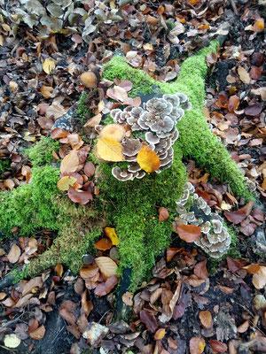 Waldbaden in Schöneiche bei Berlin